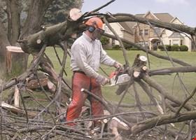 JOE'S PROFESSIONAL TREE SERVICE INC.